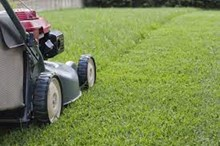 Spring Is In The Air – Grass Cutting Service